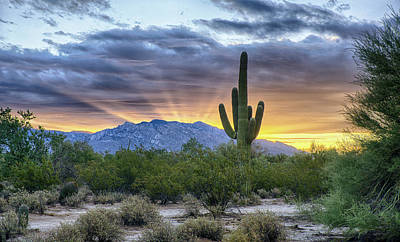 Photograph - Saguaro Rays by Charlie Alolkoy