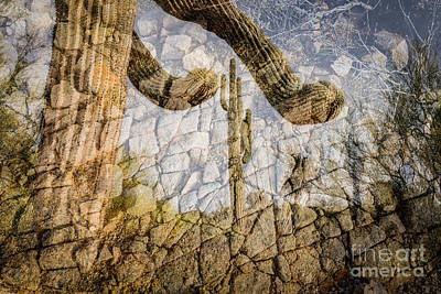 Photograph - Saguaro Rooted In Granite by Marianne Jensen