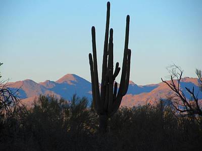 Rincon Mountains Wall Art - Photograph - Saguaro Silhouette  by John Diebolt