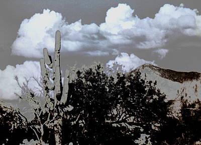 Photograph - Saguaro Stand by M Diane Bonaparte
