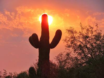 Photograph - Saguaro Sun Candle by Judy Kennedy