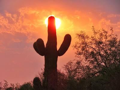 Photograph - Saguaro Sun Candle by Judy Kennedy