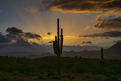 Photograph - Saguaro Sunrise In The Sonoran Desert  by Saija Lehtonen
