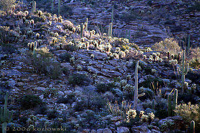 Photograph - Saguaro Sunrise by Joe Kozlowski