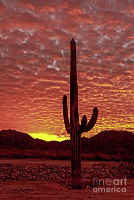 Photograph - Saguaro Sunrise by Robert Bales