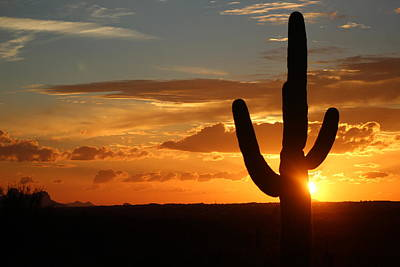 Saguaro Sunset Art Print