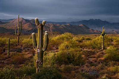 Southwest Desert Photograph - Saguaro Sunset At Four Peaks Arizona by Dave Dilli