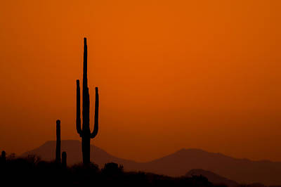 Photograph - Saguaro Sunset by Jeff Phillippi