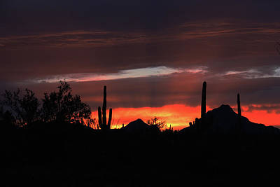 Photograph - Saguaro Sunset by Lon Dittrick