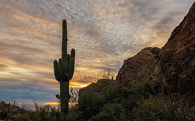 Photograph - Saguaro Sunset by Loree Johnson