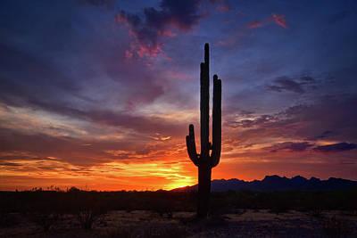 Photograph - Saguaro Sunset On The Horizon  by Saija Lehtonen