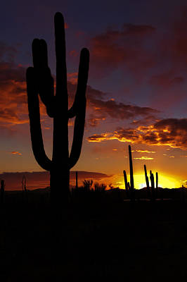 Photograph - Saguaro Sunset Silhouette #2 by Susan Rissi Tregoning
