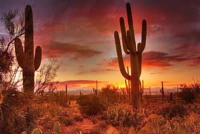 Photograph - Saguaro Sunset by Susan Rissi Tregoning