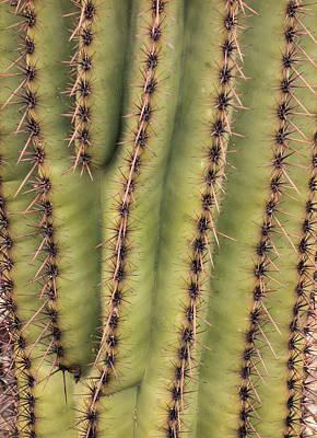 Photograph - Saguaro Texture by Loree Johnson