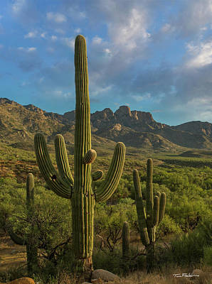 Photograph - Saguaro by Tim Fitzharris
