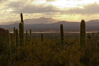 Photograph - Saguaro Valley View by Susan Rissi Tregoning