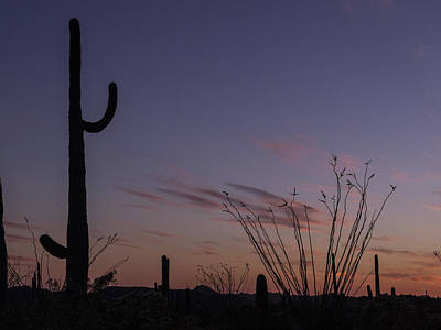 Photograph - Saguaro Waving Goodbye by Jean Noren