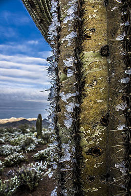 Snow Photograph - Saguaro With Ice On Spines From Desert Snowfall by Chuck Brown