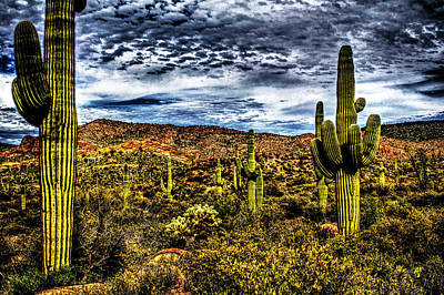 Photograph - Saguaros After Spring Rain by Roger Passman