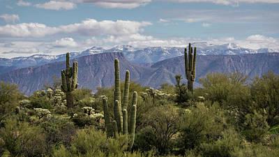 Photograph - Saguaros Amidst The Snow  by Saija Lehtonen