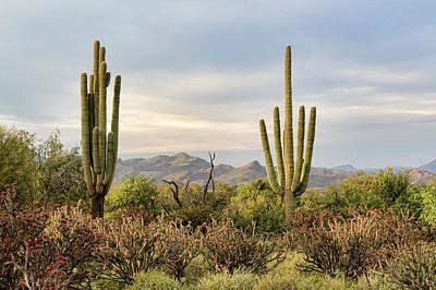 Photograph - Saguaros And Chollas by Ryan Seek