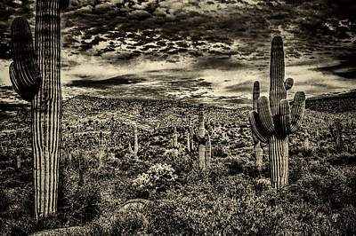 Photograph - Saguaros And Clouds by Roger Passman