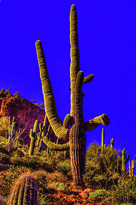 Photograph - Saguaros Everywhere by Roger Passman