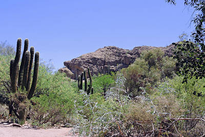Photograph - Saguaros by Grace Dillon