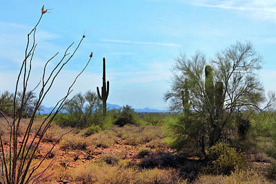 Photograph - Saguaros In Sonoran Desert by Grace Dillon