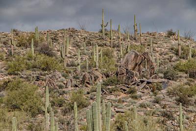 Photograph - Saguaros On The Hill by Teresa Wilson