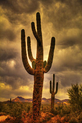Photograph - Saguaros On The Sonoran Late Afternoon by Roger Passman