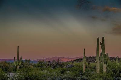 Photograph - Saguaros Salute Rays Rising by Gaelyn Olmsted