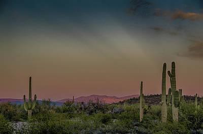 Saguaros Salute Rays Rising Art Print