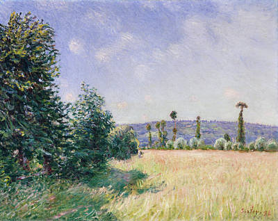 Agricultural Painting - Sahurs Meadows In Morning Sun by Alfred Sisley