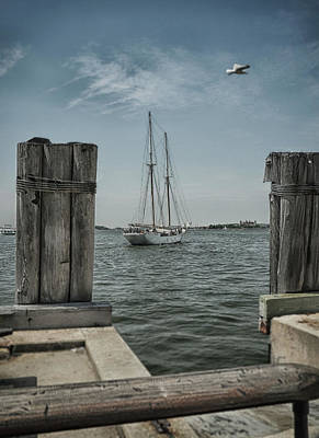 Photograph - Sail Away by Cate Franklyn