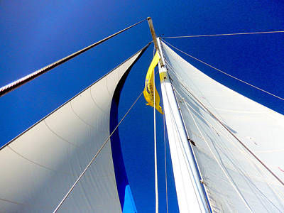 Photograph - Sail Away by Shayne Johnson Fleming