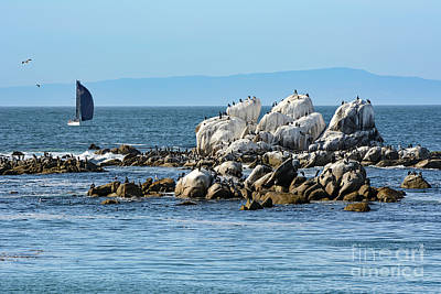 Photograph - Sailboat At Bird Rock by Susan Wiedmann