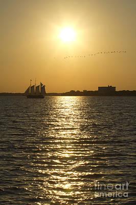 Flock Of Bird Photograph - Sailboat Sunset On The Charleston Harbor by Dustin K Ryan