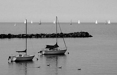 Photograph - Sailboats And Ducks B-w by Anita Burgermeister