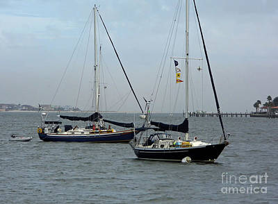 Photograph - Sailboats In The Inlet by D Hackett