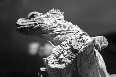 Sailfin Lizard Original by David Allen Pierson