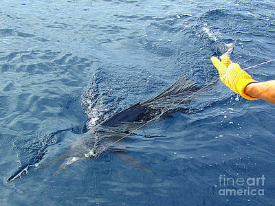 Photograph - Sailfish Caught And Coming In by Merton Allen
