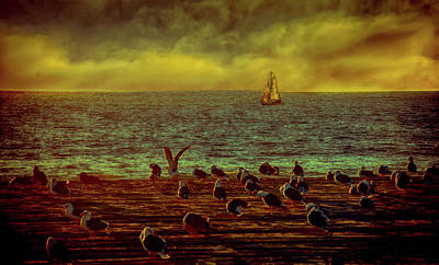 Photograph - Sailing And  Seagulls by Joseph Hollingsworth