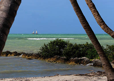 Photograph - Sailing Between The Palms by Ron Grafe