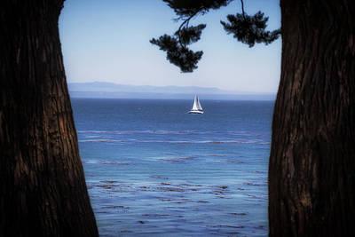 Photograph - Sailing In Santa Cruz by Marnie Patchett