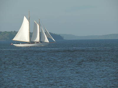 Photograph - Sailing On A Summer Breeze by Bill Tomsa
