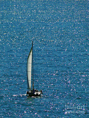 Photograph - Sailing Solo by Sue Melvin