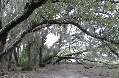 Photograph - Saint Andrews Park Florida by B L Qualls