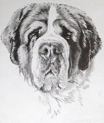 Drawing - Saint Bernard by Barbara Keith