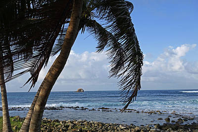 Photograph - Saint Lucia Palm Tree Small Rock Caribbean by Toby McGuire